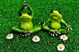 frogs-2403517_1280